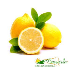 Organic Primofiore Lemons