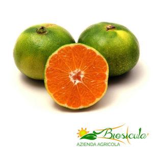 Mandarini Satsuma Miyagawa biologici