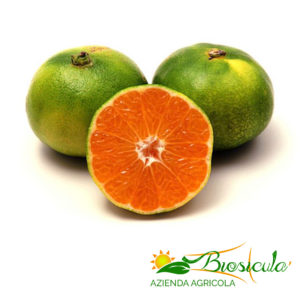 Organic Satsuma Miyagawa Tangerines