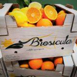 arance valencia biologiche di Sicilia