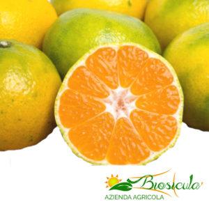 Mandarini primosole bio