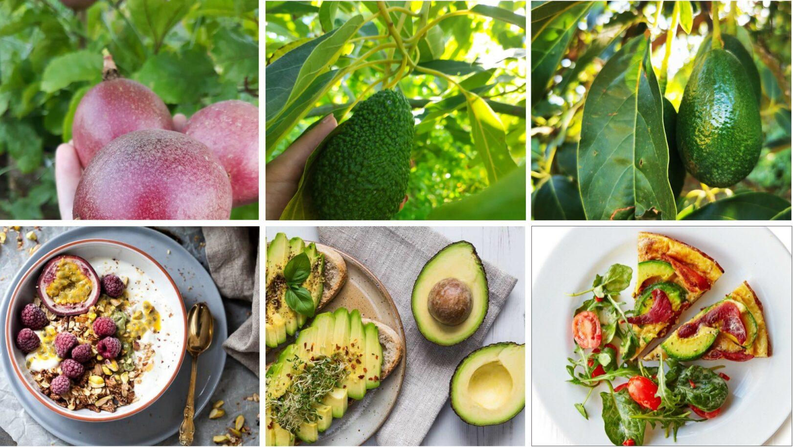 avocado e fruit passion